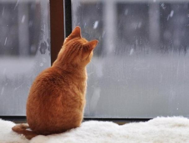 Среда в Морозовске будет снежной и ветреной