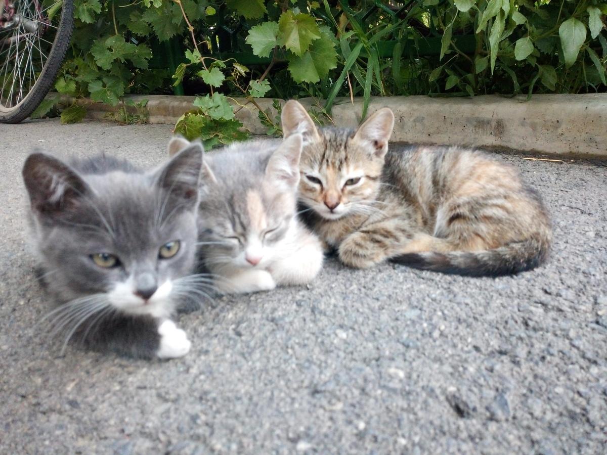 Сытые котята проблем не доставляют