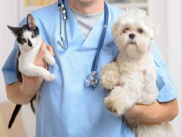 День льготной стерилизации кошек и собак на Дону проводят каждый последний четверг месяца