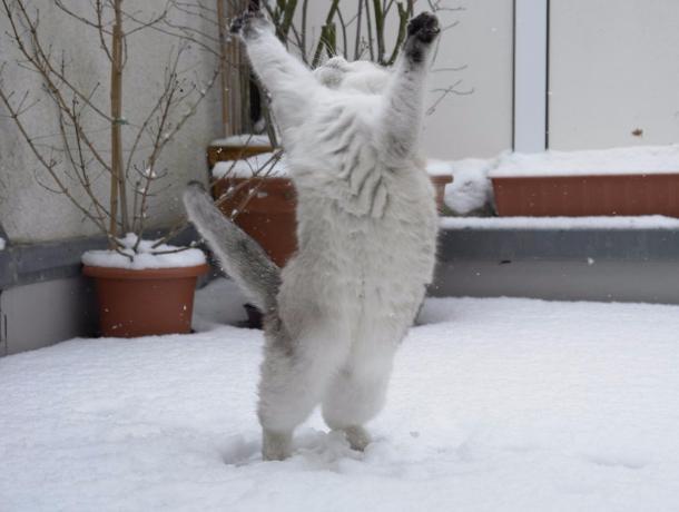 12 января в Морозовске ожидается снегопад в течении всего дня
