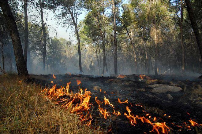 Собственников, арендаторов и пользователей земельных участков призвали убирать сухую траву