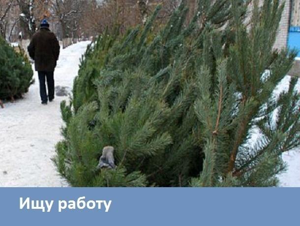 Морозовчанка согласна продавать елки