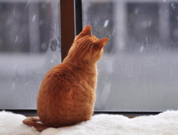 По-зимнему холодная погода установится в Морозовске 10 января